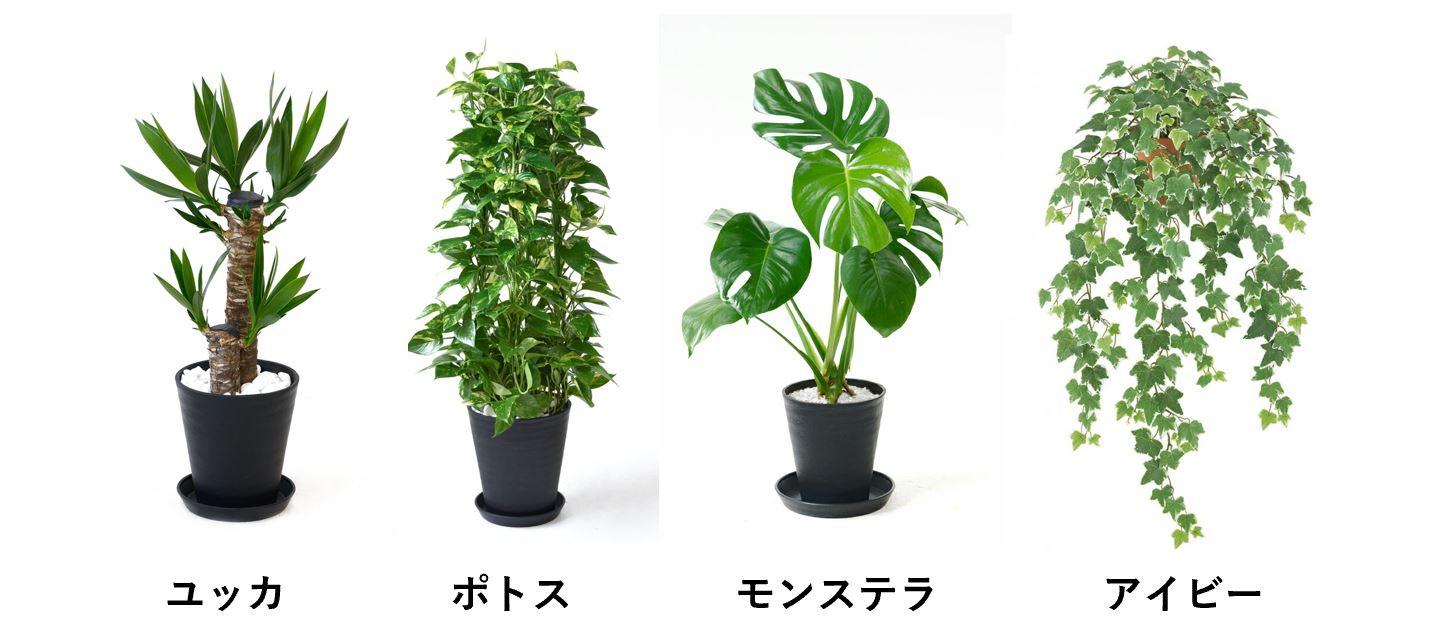 オフィスにおすすめの植物(ユッカ、ポトス、モンステラ、アイビー)